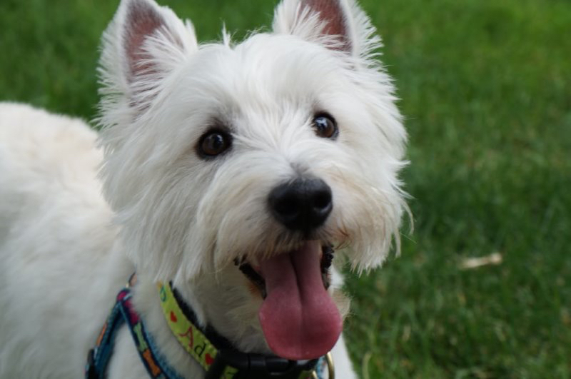 P E T  P A L S  Cedar Valley   Animal Assisted Therapy and